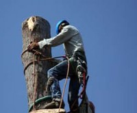 Tree Removal Lancaster